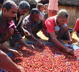 WithOneBean – Coffee With Conscience Supports Timor Leste