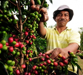 Climate Changing Coffee Yields