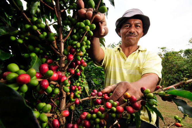 Coffee Farmer