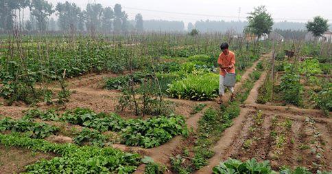 Small-Scale Organic Farming