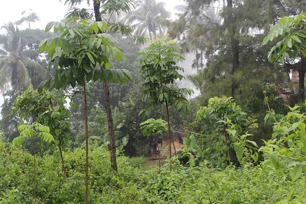 Reforestation May2013